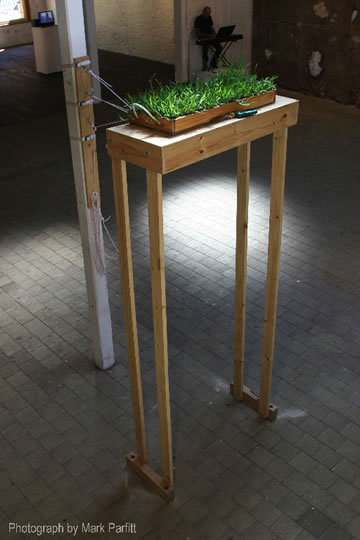 Mark Parfitt Buffalo Grass